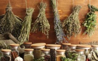 Отвары лекарственных трав для бани